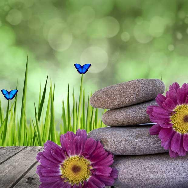 La Voix du Papillon